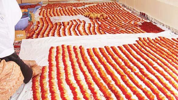خشک کردن زعفران روش سنتی